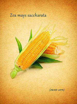 Sweet Corn Poster by Mark Rogan