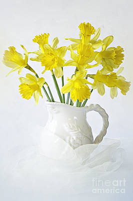 Sweet Daffs Poster by Jacky Parker