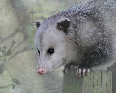 Sweet Opossum Poster by Angie Vogel
