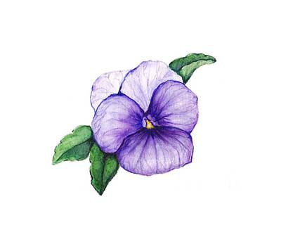 Poster featuring the painting Sweet Pansy by Heidi Kriel