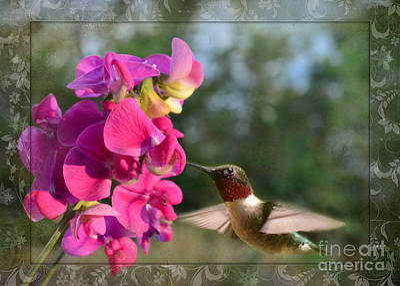 Sweet Pea Hummingbird IIi Poster