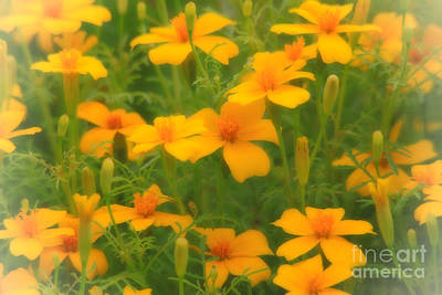 Sweet Summer Marigolds Poster by Cathy  Beharriell