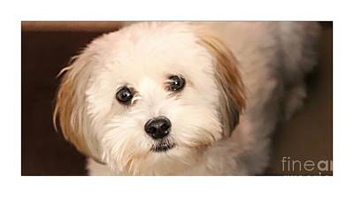 Sweetest Puppy Dog Eyes Poster