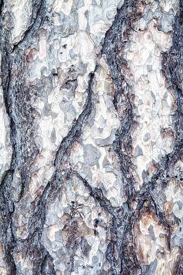 Sycamore Bark Abstract Poster