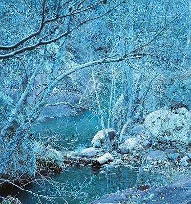 Poster featuring the photograph Sycamores And River by Kerri Mortenson