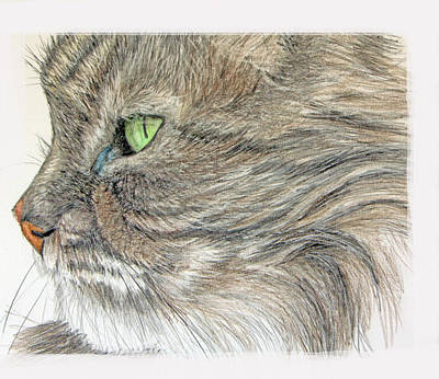 Tabby Cat Poster by Mary Mayes