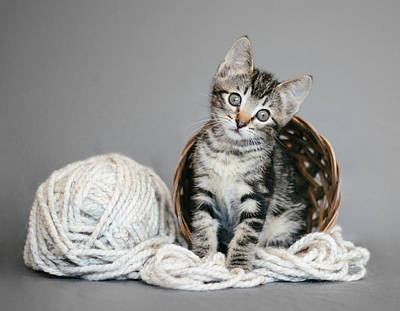 Tabby Kitten And Yarn - Animal Rescue Portraits Poster by Andrea Borden