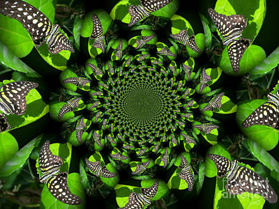 Tailed Jay Morphed Poster by Deb Schense