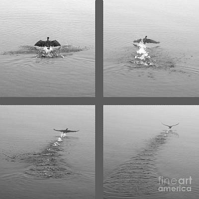 Poster featuring the photograph Takeoff by Randi Grace Nilsberg