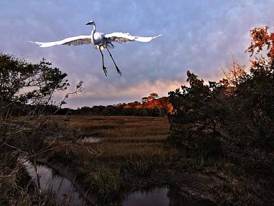Poster featuring the photograph Taking Flight by Laura Ragland