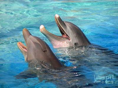 Poster featuring the photograph Talking Dolphins by Kristine Merc