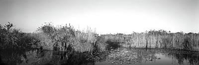 Tall Grass At The Lakeside, Anhinga Poster