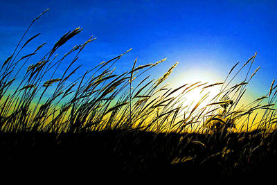 Tall Grass Poster by Bill Kesler