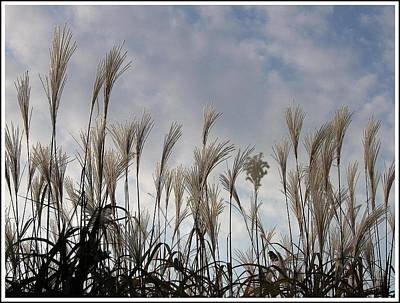 Tall Grasses And Blue Skies Poster