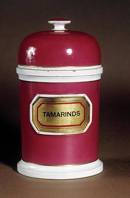 Tamarind Jar Poster by Science Photo Library