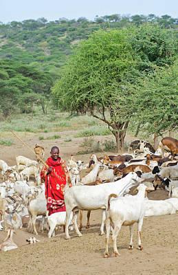 Tanzania, Arusha, Maasai Men Herder Poster