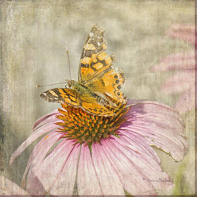 Tattered Butterfly Poster
