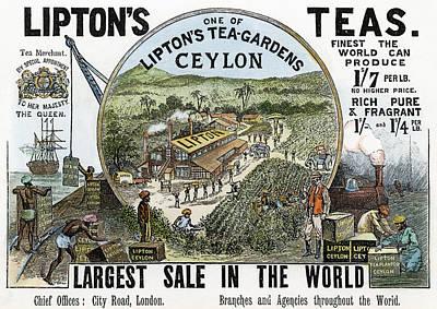 Tea Advertisement, 1896 Poster