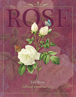 Tea Rose Poster by Tammy Apple