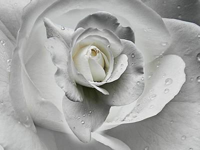 Tears In The Rosegarden Poster by Joachim G Pinkawa