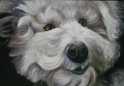 Poster featuring the painting Teddy The Bichon by Melinda Saminski