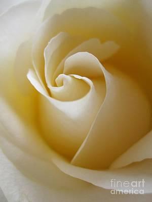 Tenderness White Rose 3 Poster