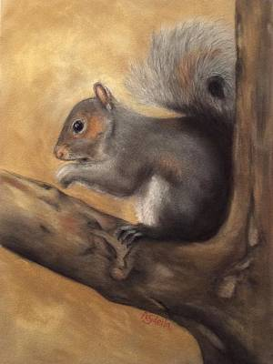 Tennessee Wildlife - Gray Squirrels Poster by Annamarie Sidella-Felts