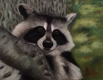 Tennessee Wildlife - Raccoon Poster by Annamarie Sidella-Felts
