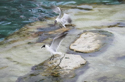 Tern On The Shore Poster