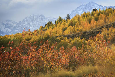 Teton Fall Poster by Jennifer Grover