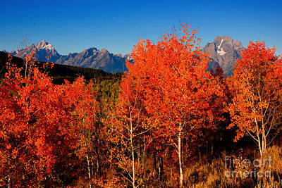 Poster featuring the photograph Tetons Colors Of Autumn by Aaron Whittemore