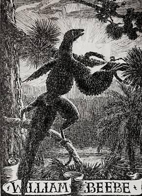 Tetrapteryx Feathered Dinosaur Poster