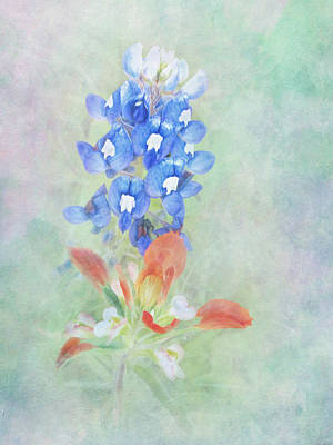 Texas Bluebonnet And Indian Paintbrush Poster by David and Carol Kelly