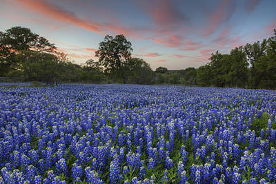 Texas Bluebonnet Images - Evening In The Texas Hill Country 1 Poster by Rob Greebon