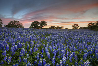 Texas Bluebonnet Images - Evening In The Texas Hill Country 2 Poster by Rob Greebon