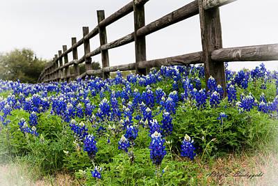 Texas Bluebonnets Poster by Allen Biedrzycki