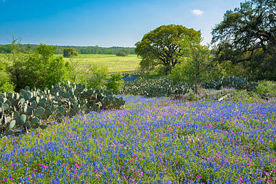 Texas Bluebonnets And Cactus Poster