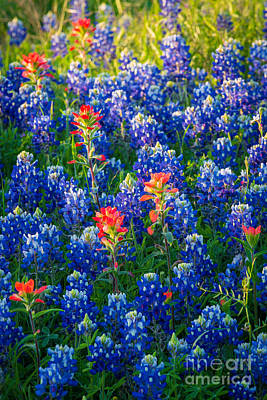 Texas Colors Poster by Inge Johnsson
