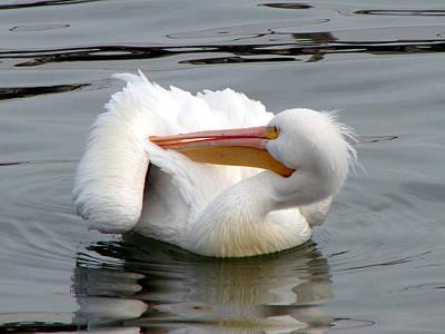 Texas Gulf Coast White Pelican Poster by Linda Cox