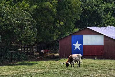 Texas Longhorn Grazing Poster