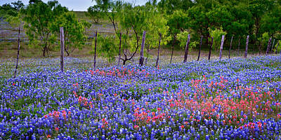 Poster featuring the photograph Texas Roadside Heaven -bluebonnets Paintbrush Wildflowers Landscape by Jon Holiday