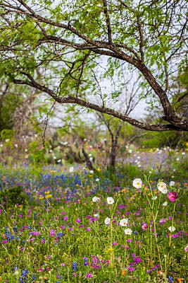 Texas Roadside Wildflowers 732 Poster