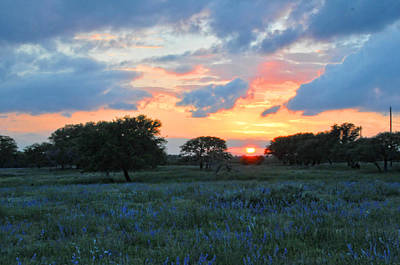 Texas Wildflower Sunset  Poster