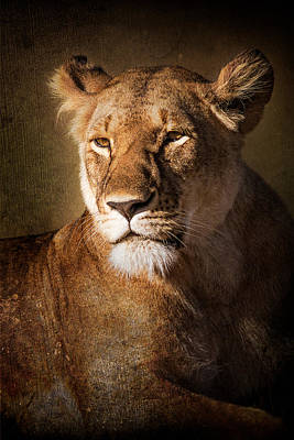 Poster featuring the photograph Textured Lioness Portrait by Mike Gaudaur