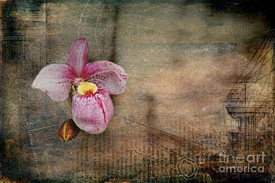 Poster featuring the photograph Textured Orchid by Vicki DeVico