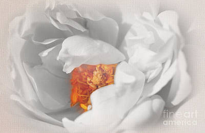 Textured Summer Rose Poster by Eden Baed
