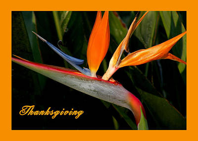 Thanksgiving Card Bird Of Paradise Poster by Rosalie Scanlon