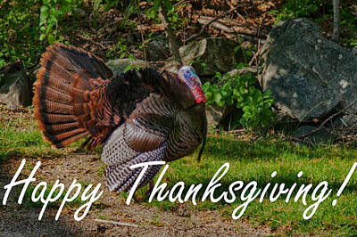 Thanksgiving Turkey Poster by Jeff Folger