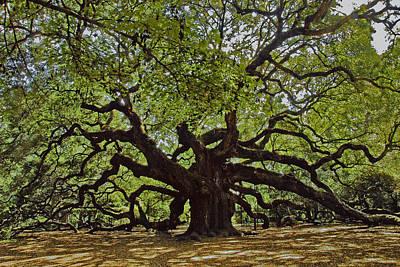 The Angle Oak Poster