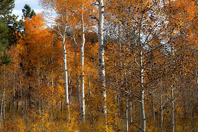 The Aspens Poster by Sean Ramsey